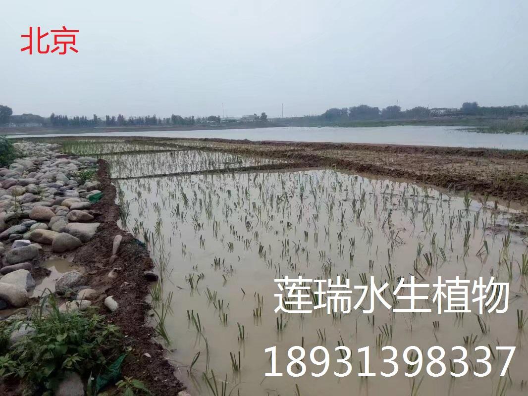 北京公园威廉希尔最新网址种植