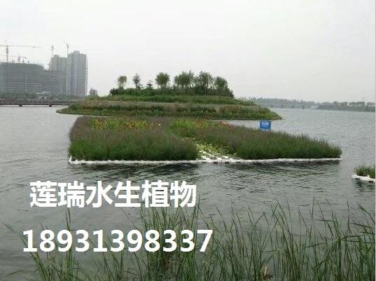 宁波生态浮岛