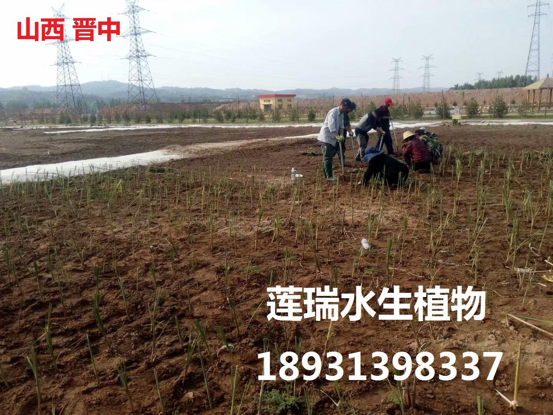 山西晋中生态湿地工程
