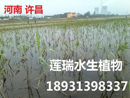 河南许昌市威廉希尔最新网址净化工程