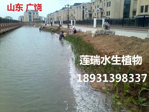 山东广饶县  世纪家园威廉希尔最新网址工程