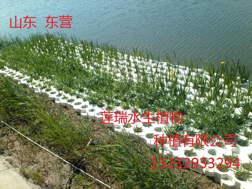 山东东营 生态浮岛工程