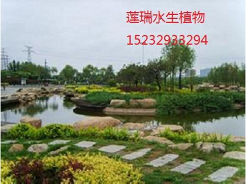 山西省汾河湿地公园