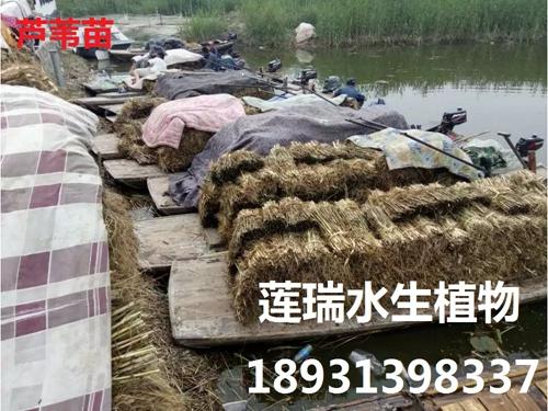 陕西渭南湿地公园威廉希尔最新网址种植工程