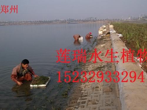 河南郑州威廉希尔最新网址种植工程