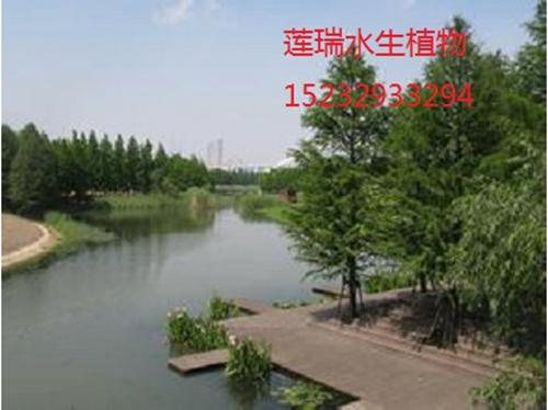上海市浦东后滩公园